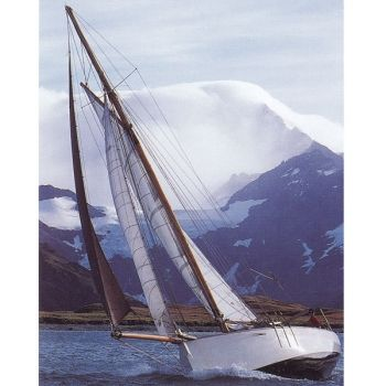 Curlew sailing beautifully in Antarctica
